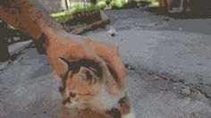 Truco infalible para desactivar a tu gato