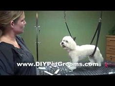 ▶ How to Groom A Maltese (Puppy Cut) - Do-It-Yourself Dog Grooming - YouTube