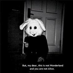 49dfc142f2adb068d620aba2d00c3c6e--white-rabbits-white-bunnies.jpg 520×520 pixel