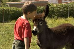 Visita Burrolandia, el paraíso de los burros