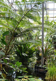 Botanical gardens, Utrecht, Holland
