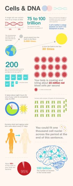 Infographic that visually explains interesting facts about Cells & DNA