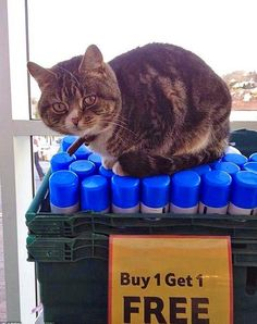 Mango the supermarket cat who made a local Tesco store in Tiverton, England, his second home four years ago, has now many fans and admirers. This little charmer will steal your heart: http://www.traveling-cats.com/2015/01/cat-from-tiverton-england.html