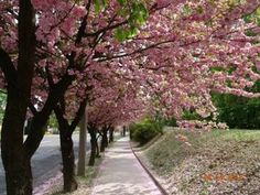 zala City People, Hungary, Places To Go, Sidewalk, Country Roads, Park, Amazing, Cities, Landscapes