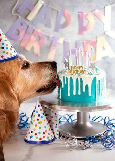 Dog First Birthday, Dog Birthday Cakes, Dog Cake Recipes, Puppy Cake, Dog Bakery, Homemade Dog Treats, Doggie Treats, Dog Cookies, Girl And Dog