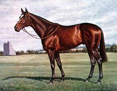 Image result for Roberto  horse
