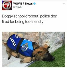 Police Dog dropout, fired for being too friendly! Enjoy RUSHWORLD boards, BARK RUFFINGTON'S DOG KINGDOM, UNPREDICTABLE WOMEN HAUTE COUTURE and FANCY DESSERT RECIPES. Follow RUSHWORLD! We're on the hunt for everything you'll love!
