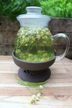 Linden Tea Medicinal Benefits — Practical Self Reliance