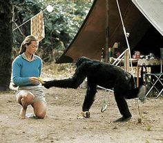 Jane Goodall - anthropologist, primatologist, author, conservationist, humanitarian, non-profit founder, environmentalist