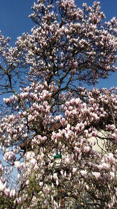 #Flowerlover #springtome #ilovespring