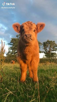 Cute Baby Cow, Baby Animals Super Cute, Cute Wild Animals, Cute Little Animals, Animals Beautiful, Pretty Animals, Baby Farm Animals, Baby Cows, Baby Animals Pictures