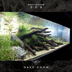 "ronbeckdesigns: "" aquarium | dave chow """