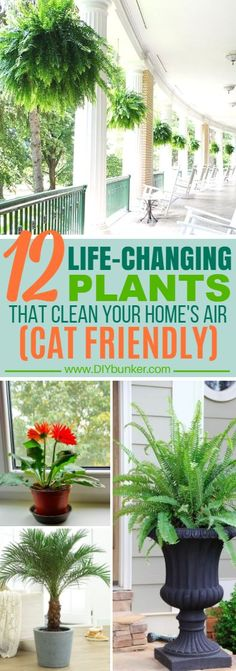 These 12 Air-Filtering Plants Are Perfectly Safe For Cats! #homehacks #hacks #airfilteringplants #plants #houseplants