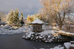 Zima w ogrodach