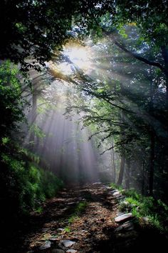 """""""The first light of the morning breaks the vapours of the previous rains, falling through the fronds and touching unknown depths of the forest."""" Photo: Close Encounter, by Marco Soggetto on Foto Nature, All Nature, Nature Sounds, Green Nature, Forest Light, Tree Forest, Beautiful World, Beautiful Places, Beautiful Pictures"""
