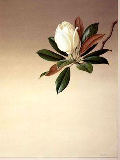 Magnolia grandiflora Paul Jones Born Sydney, Australia, Acrylic on paper (cool leaves) Flor Magnolia, Magnolia Flower, Magnolia Trees, Motif Floral, Arte Floral, Botanical Drawings, Botanical Illustration, Botanical Flowers, Botanical Prints