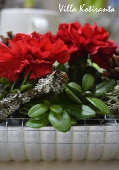 Jouluinen kukka-asetelma vanhaan kakkuvuokaan / Beautiful, Christmas flower arrangement, created into an old cake tin Christmas Table Settings, Christmas Home, Flower Arrangements, Flowers, Plants, Beautiful, Floral Arrangements, Plant, Royal Icing Flowers