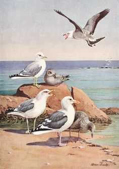SALE 50% Bird Print, Bird Art Print (1930s Beach Art, Seagulls Art Print) Vintage Bird Wall Decor No. 309-1