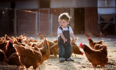Most Popular People Photos / Cute Kids Photography, Farm Photography, Cute Baby Pictures, Baby Photos, Animals For Kids, Baby Animals, Farm Animal Birthday, Chicken Painting, Farm Kids