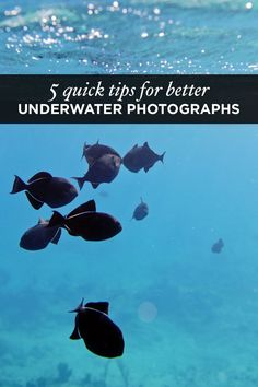 5 Quick Underwater Photography Tips for Better Travel Photos. Sponsored Sponsored 5 Quick Underwater Photography Tips for Better Travel Photos. Wedding Photography Tips, Photography 101, Underwater Photography, Camera Photography, Digital Photography, Amazing Photography, Landscape Photography, Travel Photography, Street Photography