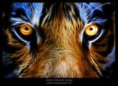 Foto de um tigre transformada digitalmente. Veja mais em https://www.facebook.com/cecgodoyphotos