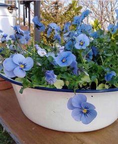 Mavi beyaz