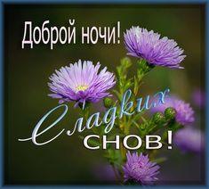 ✿Окрытки✿ и поздравления✿   ВКонтакте День Рождения Поздравления, Спокойной Ночи, Красные Розы, Сообщения, Цитаты, Frases, Мысли
