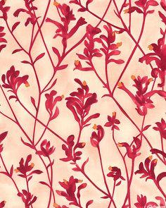 'Kangaroo Paw' by Natalie Ryan for M & S Textiles Australia.   Australian Import - Kangaroo Paw - Blush Pink