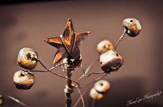 starbright   Flickr - Photo Sharing! ©ThompCyn Photography - Cynthia Harris http://www.thompcynphotography.com