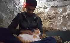 The Syrian town with more cats than people - BBC News Group Of Cats, Kitten Food, Lots Of Cats, Cat Walk, Pencil Illustration, Bored Panda, Double Exposure, Four Legged, Make You Smile
