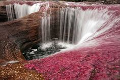 Worlds Most Beautiful River, Cano Cristales in Columbia, Serrania de Macarena National Park. Mosses and algae bloom for a dazzling display of colors. June to Late November