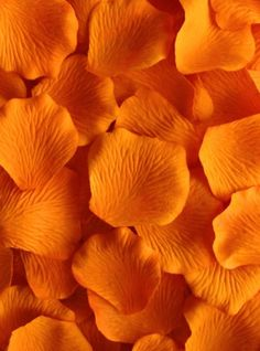 Flowers Aesthetic Pastel Orange 27 Ideas Flowers A Orange Aesthetic, Rainbow Aesthetic, Aesthetic Colors, Flower Aesthetic, Aesthetic Pastel, Aesthetic Girl, Orange Pastel, Orange Flowers, Burnt Orange