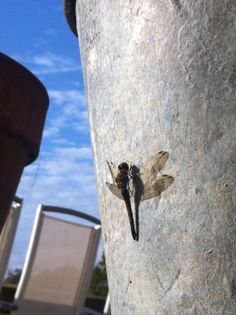 Summer time at home, dragonfly is resting its legs.