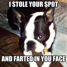 """with mine, it would be """"burped"""" in your face. those are lethal."""