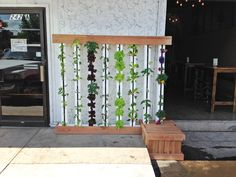 The living Farm Wall at Pateros Creek Brewery in Fort Collins, CO.