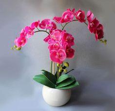 Hnojivo z banánové slupky zařídí, aby orchideje znovu vykvetly