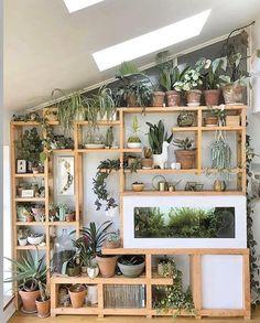 Room With Plants, House Plants Decor, Plant Decor, Shelves With Plants, Plant Rooms, Indoor Plant Wall, Plants On Wall Indoor, Indoor Plant Shelves, Potted Plants
