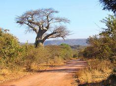 Kremetartboom Africa Painting, Zimbabwe Africa, Photo Tree, Landscape Art, New Art, Aloe, South Africa, Dates, Cool Photos
