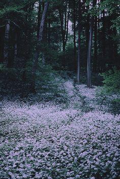 a forest sleeps | Flickr - Photo Sharing! - Olivia Harmon