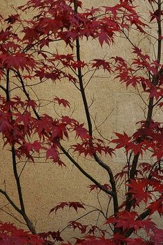 Japanese Painting by John 3000, via Flickr