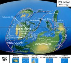 Devonian, 417-354 Ma ago: by the Mid-Late Devonian, contin-ental movement increased re-sulting in numerous mtn-build-ing events. By 190 Ma ago, NA & EU collided to form a large continent, called Euroamerica, which sat near the equator. The Supercontinent Gondwana & Euroamerica were surrounded by subduction zones on all sides. Most of the landmasses were bunched up, & a vast ocean covered the rest of the planet