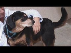 Animal Care: How to Choose a Dog - http://petcarecheap.com/animal-care-how-to-choose-a-dog/