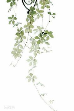 Drawing Plant Leaves, Plant Clipart, Illustration, Hand Painted PNG Transparent Image and Clipart fo Watercolor Flowers, Watercolor Paintings, Watercolours, Green Watercolor, Foto Nature, Nature Nature, Plant Drawing, Plant Painting, Cool Plants