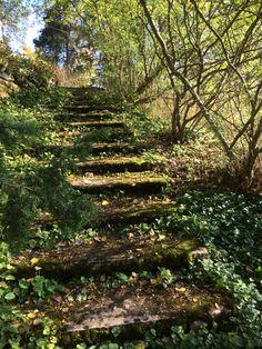 Sammaloituneet portaat puutarhassa.