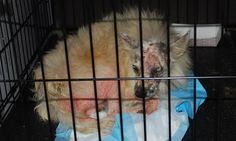 PETITION...PLEASE SIGN N SHARE TO SAVE THESE ANIMALS FROM THIS HELLHOLE THAT THE USDA IS MAKING MONEY FROM...TY. PLEASE SHARE SHARE. End Abuse at Notorious Puppy Mill