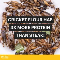 Cricket flour - Dr. Axe http://www.draxe.com #health #holistic #natural