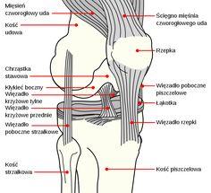 File:Knee diagram pl.svg