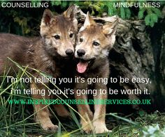 Yellowstone Wolf Pups Low Survival Rate Linked To Canine Distemper Beautiful Wolves, Animals Beautiful, Cute Animals, Beautiful Creatures, Wolf Photos, Wolf Pictures, Funny Pictures, Yellowstone Wolves, Amazing Animal Pictures