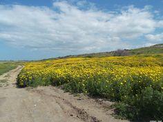 תמונות מהטיול של היום - כותבת לברוח / בורחת לכתוב - תפוז בלוגים