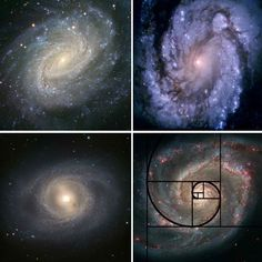 Here is the Fibonacci spiral in the swirl of a galaxy, just as it appears in so many other natural forms